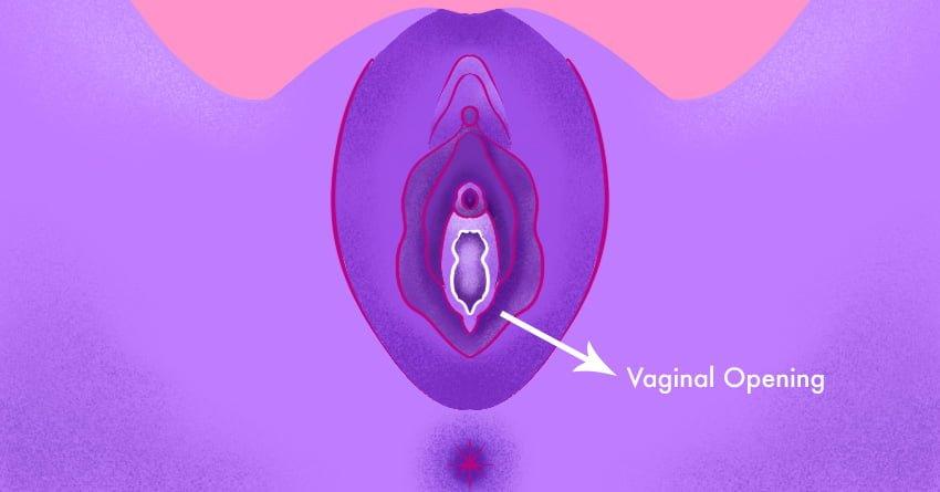 Vaginal Opening