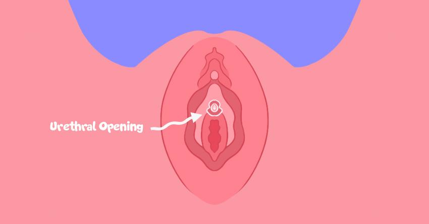 Urethral Opening