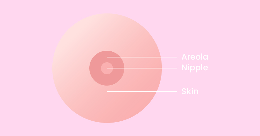 Exterior Anatomy of the Breast