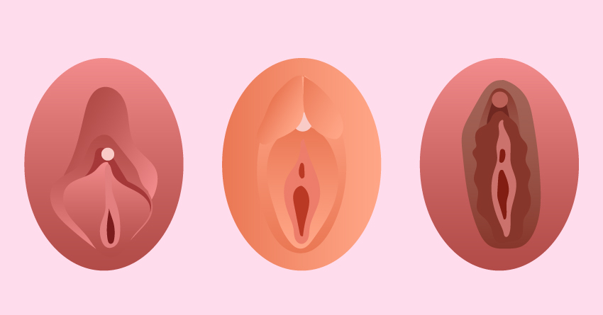 The clitoris comes in different sizes and colors.